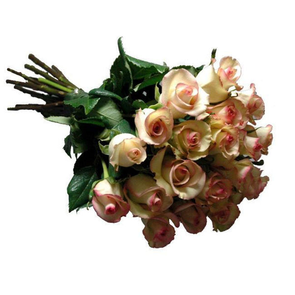 Picture of rosas
