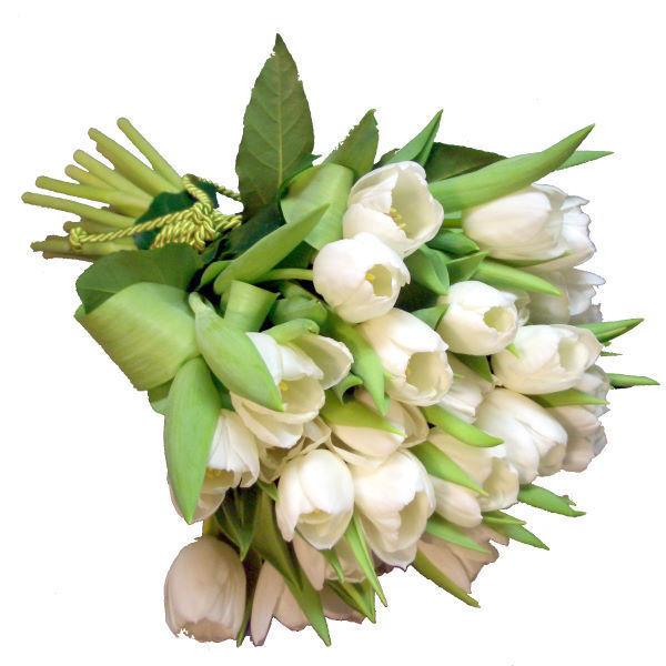 """Picture of tulipas """"premium"""""""