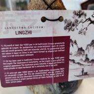 Picture of Ganoderma lucidum'Lingzhi'